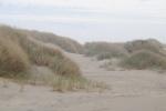 Oregon Dunes 1.0
